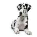 Karmy dla psów dorosłych